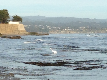 Pleasure Point Egret
