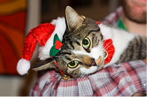 Christmas_Cat_by_http___www.flickr.com_people_38074672@N00))2_013-11-26