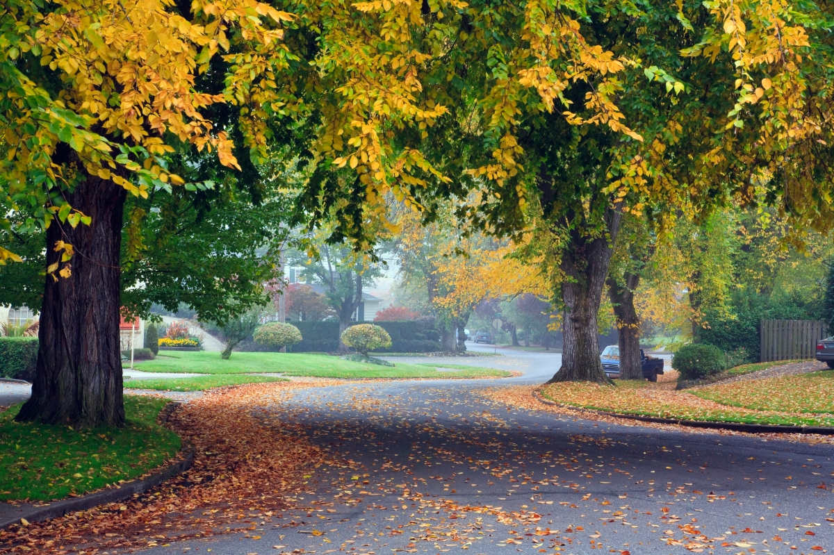 FALL driveway view(2) off C21online 092418