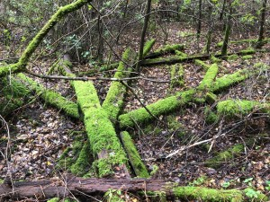 moss covered wood on forest floor